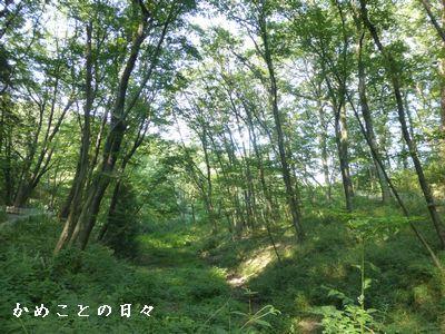 P1050861-ki.jpg