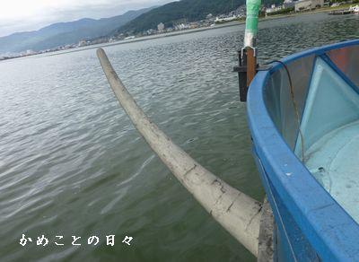 P1070151-kame.jpg