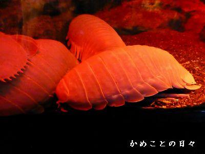 P1070365-dai.jpg