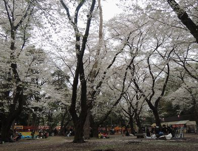 oomiyakouen.jpg