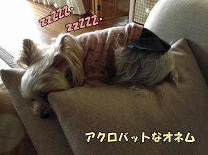 20130511003.jpg