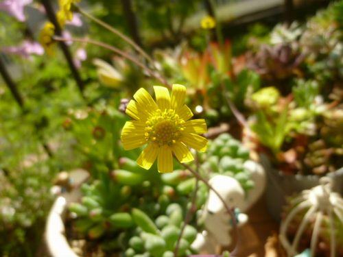 グリーンネックレスのお花