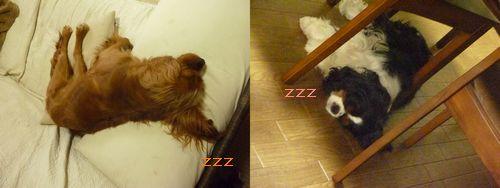 よく寝てるー