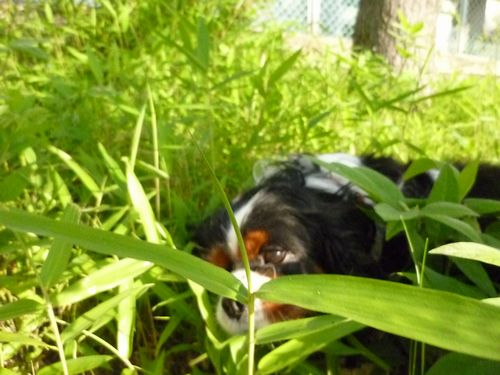 道草を食う犬