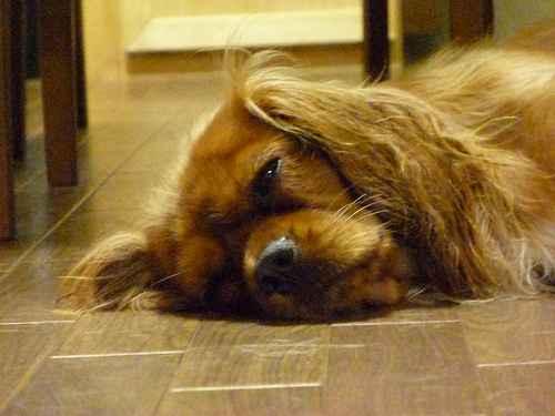 チャコの寝顔