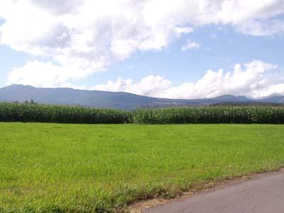 トウモロコシ畑を挟んで草津白根山を望む