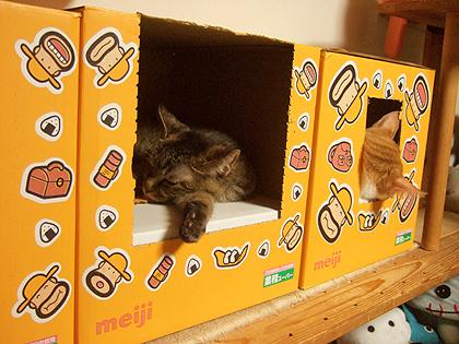 文化住宅ダンボで寝入るダヤン、ノル
