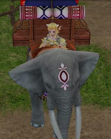 初めての象!