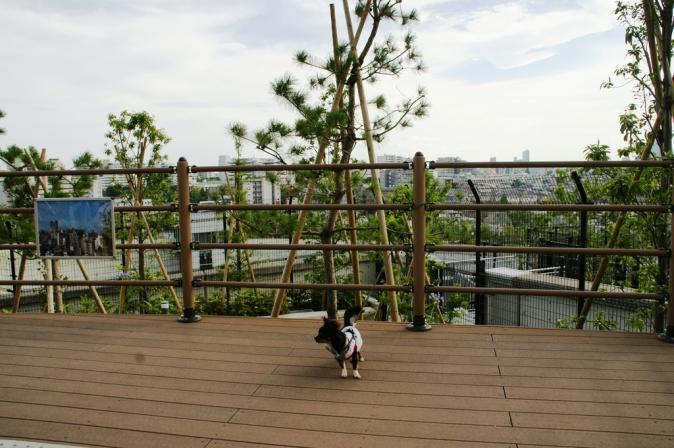 DSC02476天空庭園
