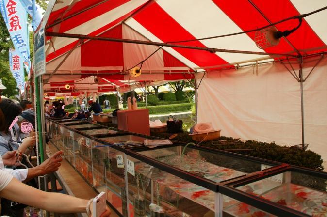 DSC02954加工金魚祭り