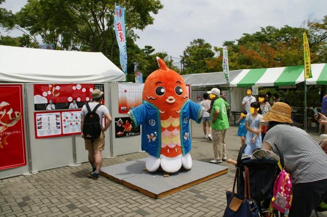 DSC02845金魚祭り