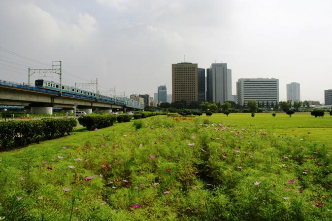 DSC03136多摩川コスモス