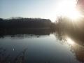元旦の善福寺公園