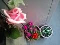 玄関のお花2