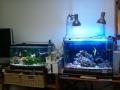 金魚と海水魚