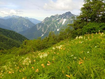 2592mピークのお花畑と前穂高岳、明神岳
