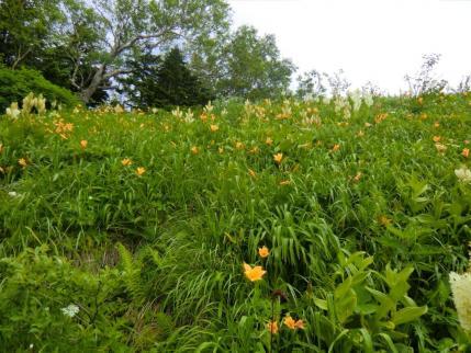 2592mピークのお花畑