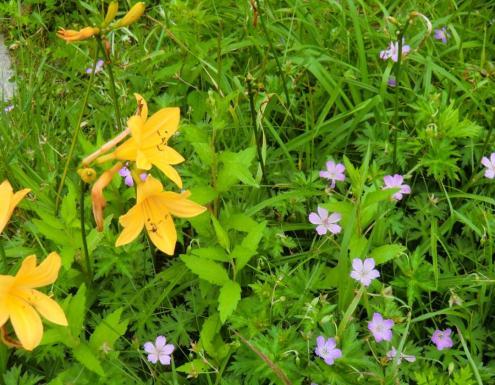 王ヶ頭の柵の中のお花畑