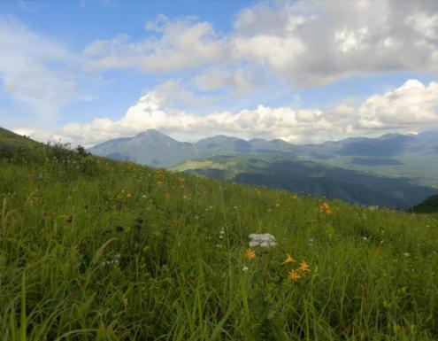 ニッコウキスゲと北八ヶ岳