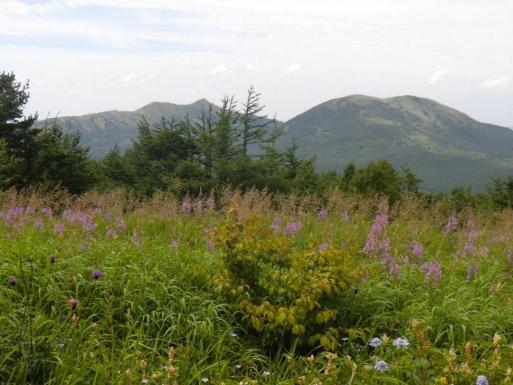 お花畑の向うに湯の丸山・烏帽子岳
