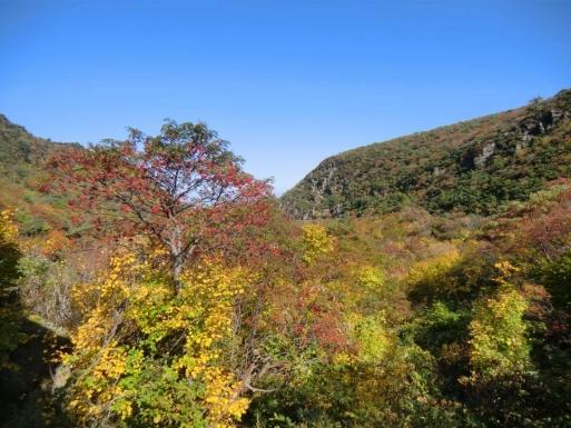 くろがね小屋周辺の紅葉
