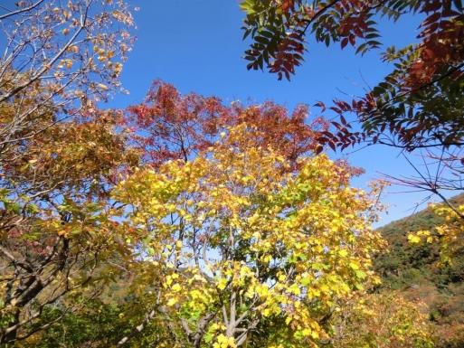 紅葉を眺めながら