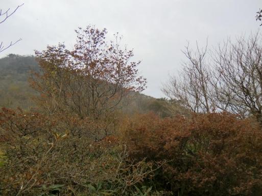 荒山高原の紅葉