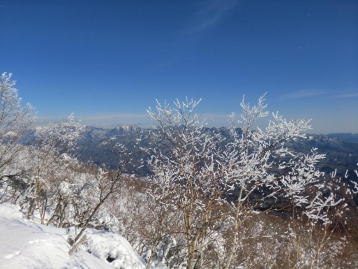 霧氷がいい感じになってきた