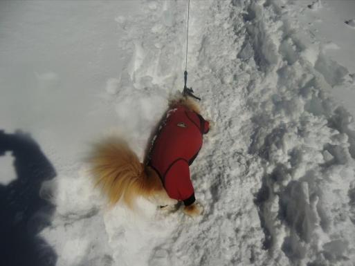 雪にすりすり