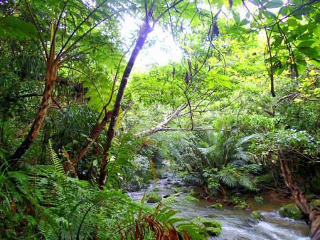 今年の夏休みはお得な格安離島ツアー割引プラン!女子旅家族旅行で石垣島・西表島へ遊びに行こう!西表島ツアーランキング人気の西表島ケンガイドが家族旅行におすすめする人気の観光スポット・アクティビティツアーをご紹介、マングローブをカヌー・SUP・スタンドアップパドルボードでジャングル探検で滝めぐりやキャニオニングでアドベンチャー体験を、アドベンチャーボートで行くパナリ島シュノーケル・星砂の浜シュノーケリングでツアーなど八重山旅行を遊びつくそう!