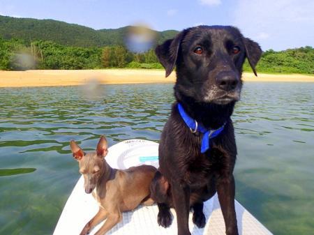 Love&Dog SUP