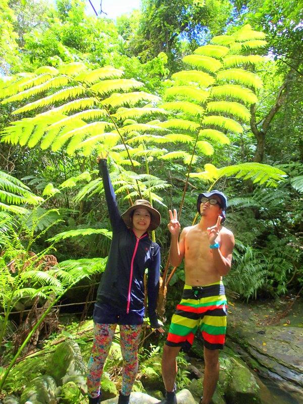 西表島SUP ジャングルツアー