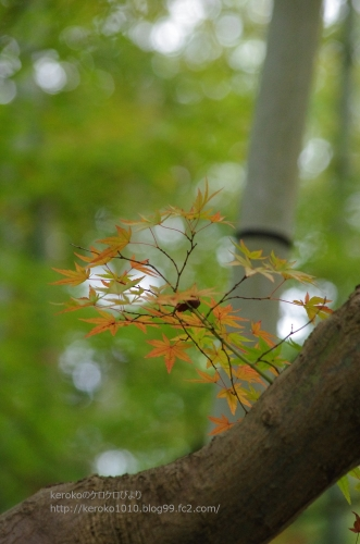 2014-11-02文化ゾーン紅葉
