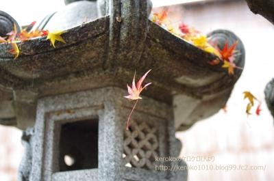 2014-12-01自宅庭落葉