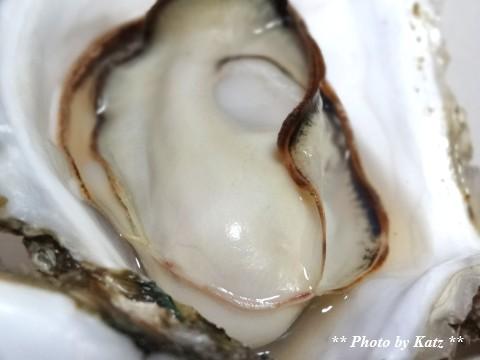 20140204 仙鳳趾牡蠣 (2)