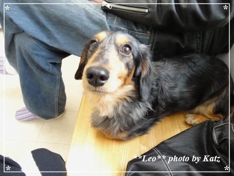 20140118 Leo (2)