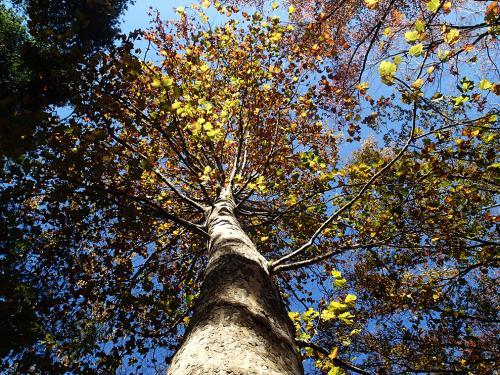 セミの木の秋_convert_20131208185022