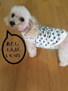 愛犬726
