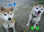 タロ&ハナ