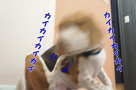 DSC06422_20140119223503bad.jpg