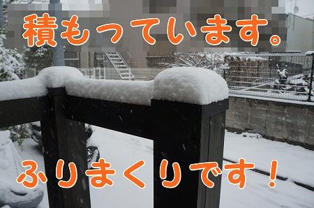 DSC06931.jpg