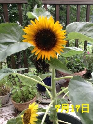 image_20130717075708.jpg