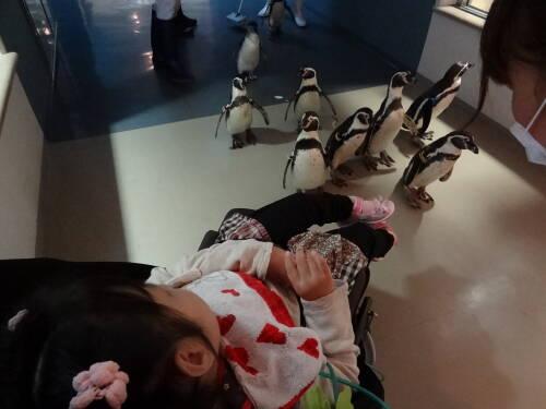 11ペンギンに囲まれるうちゃま
