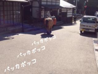 1120_6a.jpg