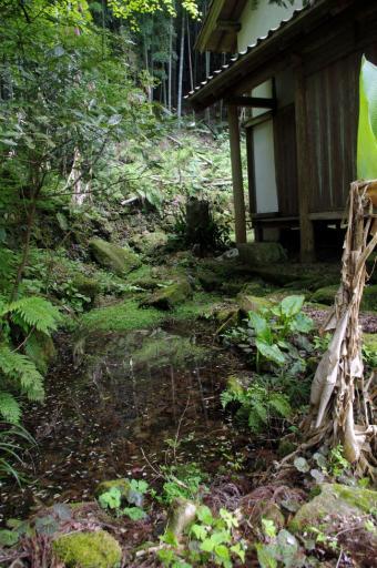 智光院の池泉