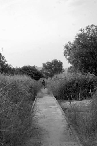 斐伊川に向けて道が続く
