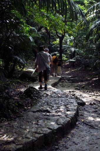 琉球石灰岩の歩道