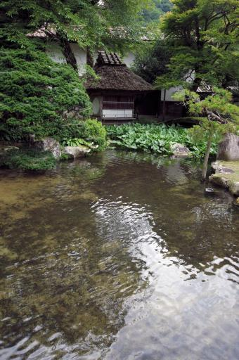 櫻井家の池と一丈庵