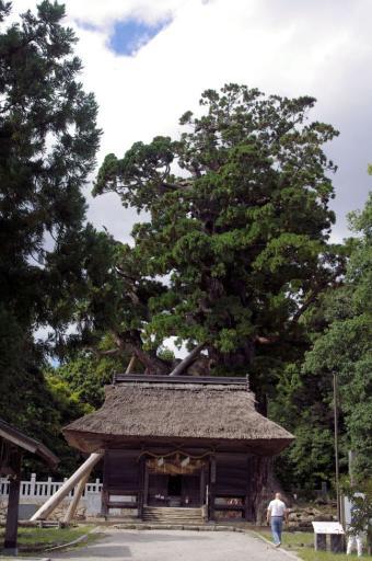 八百杉と随神門