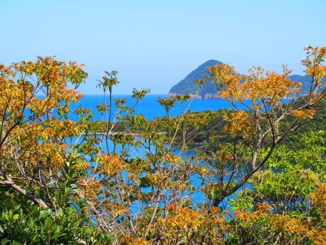 ハゼの新緑と長目の浜